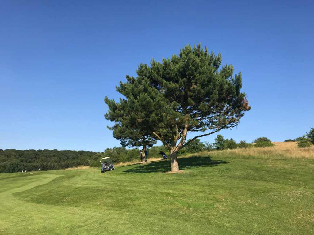 Tree golf by Rupert Birch